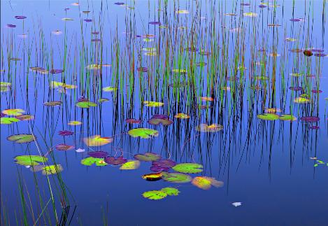 Lilies Of The Pond_PeterLik