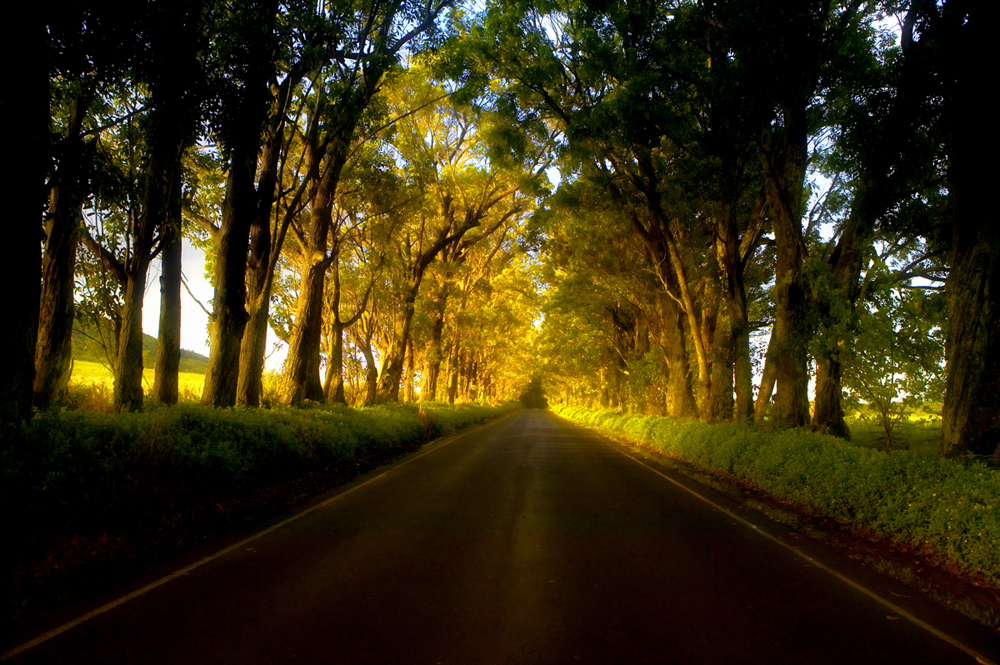 tree tunnel_100_Dukoff
